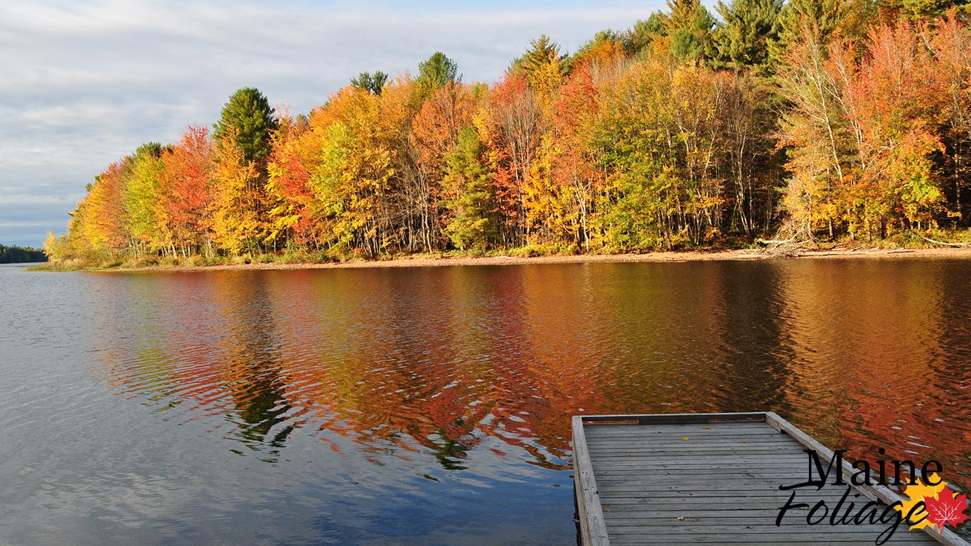 MaineFoliage.com: Photo Gallery: Foliage Wallpaper